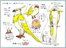Tokitoki concepts2
