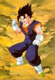 Vegetto photo