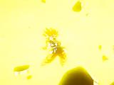 Super Onda Explosiva