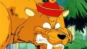 Tigre con cappello di gohn