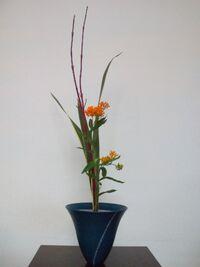 Audacciflowersanshu
