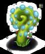 Blue Snail Plant