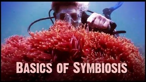 Symbiosis Mutualism, Commensalism, and Parasitism