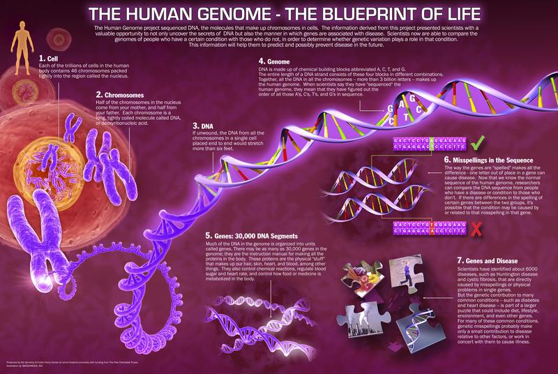 Human genome project dragonflyissuesinevolution13 wiki fandom human genome project malvernweather Images