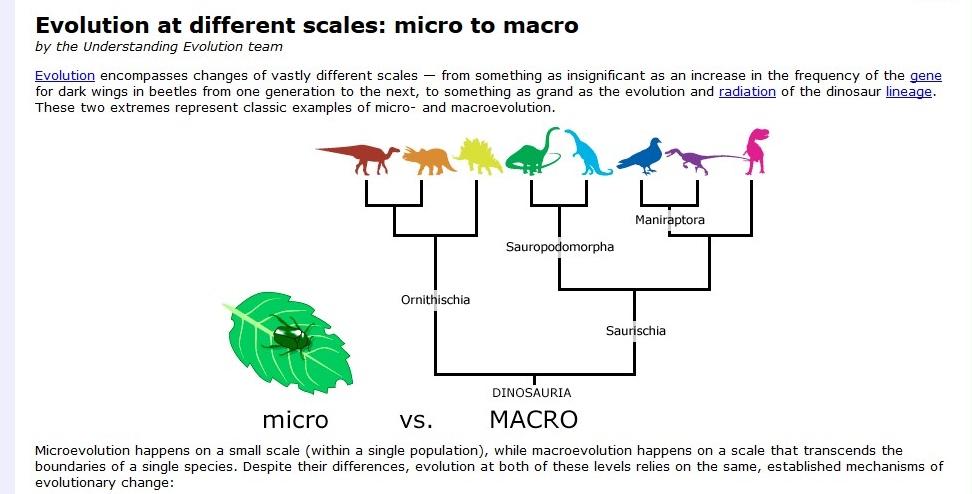 Macro Vs Microevolution Dragonflyissuesinevolution13 Wiki Fandom