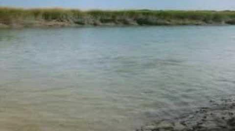 Bottlenose Dolphin Mudflat Hunting