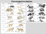 Convergent-Evolution-01