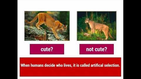 Evolution 1 Natural Selection vs. Artificial Selection