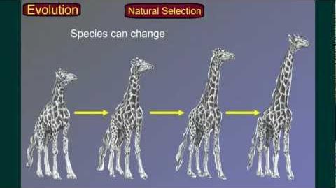 Evolution Part 3 Speciation