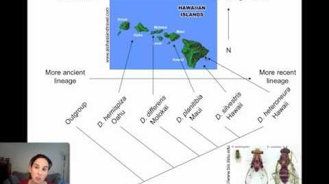 Allopatric Speciation and Dispersal