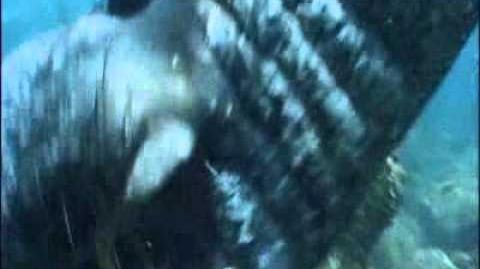 Elephant Seal Attacks Divers