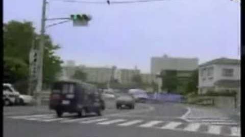 Crows using traffic to crack walnut-0