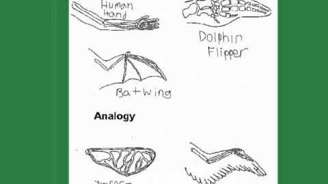 Homologous vs Analogous Traits Evolution series pt1-0