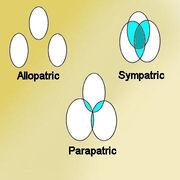 Allopatric