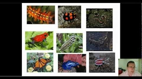 Aposematic & Cryptic Colorations Mimicry