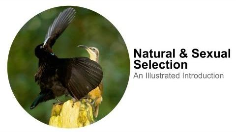 Natural Selection & Sexual Selection An Illustrated Introduction