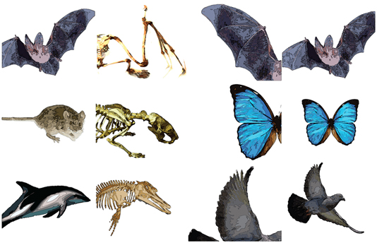 Convergent Evolution Dragonflyissuesinevolution13 Wiki Fandom