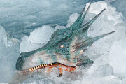 Dragon head in ice cave