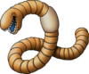 DQIVDS - Lugworm
