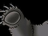 Ursa panda