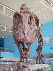 Dinosaur Bones2