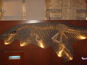Baryonyx skeleton by WorldSerpent