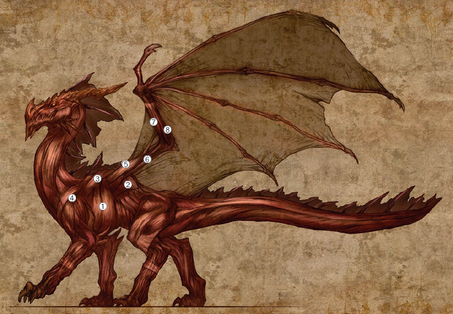 Western Dragons | Dragons | FANDOM powered by Wikia
