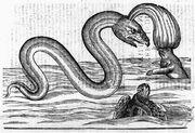 AldrovandiSerpent