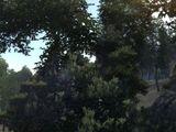Verda Woodlands