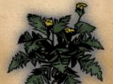 Matured Greenwarish