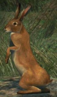 Dragon's Dogma - Rabbit03