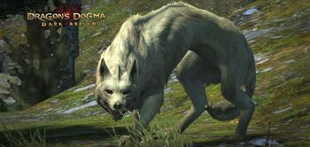 Direwolf Zoomed