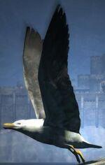 Dragon's Dogma - Seabird