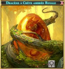 Dracène à crète ambrée Royal