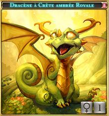 Dracène à crête Ambrée Royal
