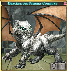 Dracène des Pierres commune