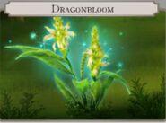 Dragonbloom