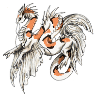 Koi dragon sanke