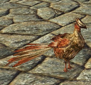 Companion chicken