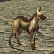 Companion hound
