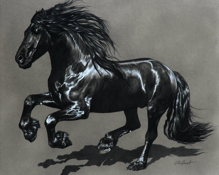 Friesian Gelding by wnf2000