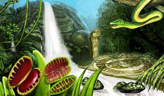 Krakesh-rainforest