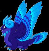 Midnight Dragon Adult