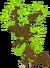 TreeDragonTeen