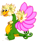 FlowerDragonLightRiftAdult