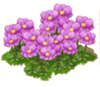 PurplePosies
