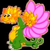 FlowerDragonFireRiftAdult