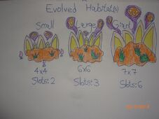 EvolvedHabitats