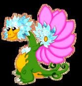 FlowerDragonColdRiftAdult