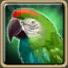 Смарагдовый попугай